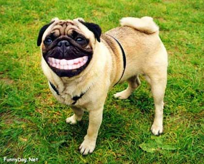 dogs who laugh